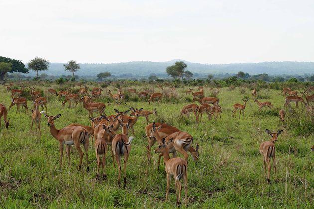 mukumi-safari-4
