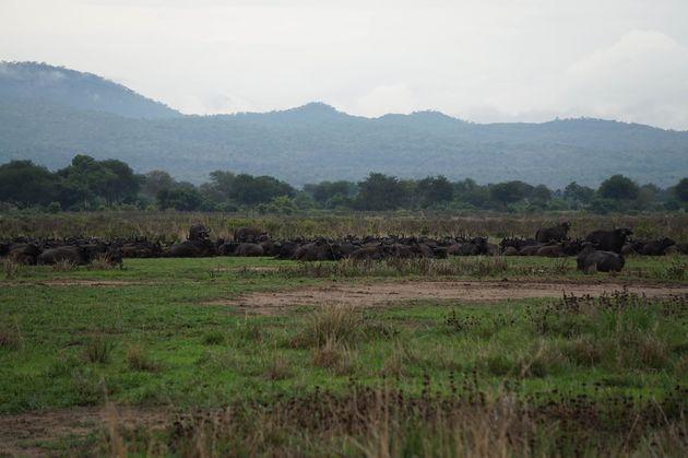 mukumi-safari-6