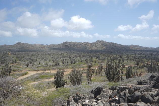 National-Park-Bonaire-Slagbaai