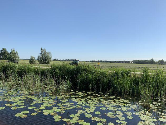Natuur Friesland