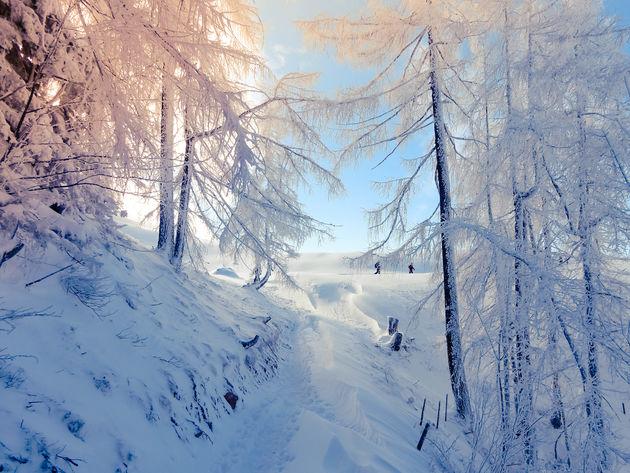 natuur-sneeuwschoenwandelen