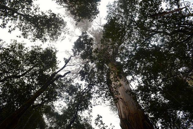 natuur_tasmanie
