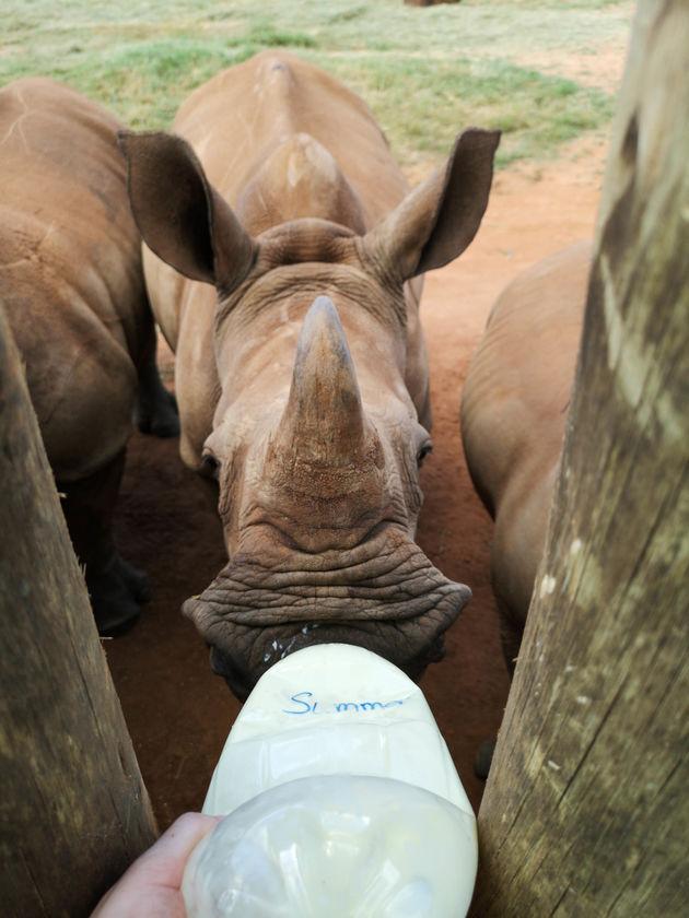neushoorn-baby-zuid-afrika