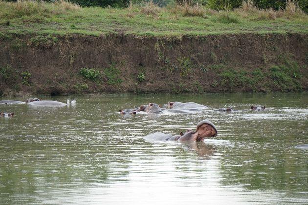 nijlpaarden-mukumi-safari
