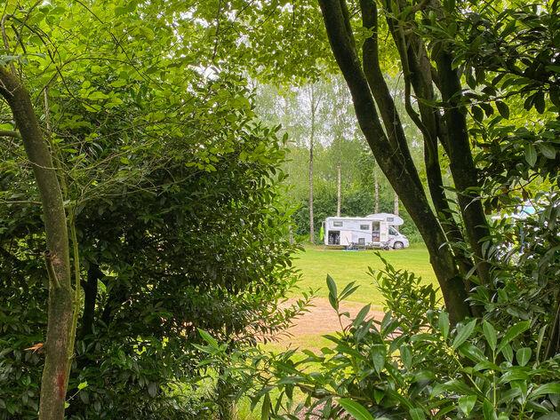 Noord-brabant-bos