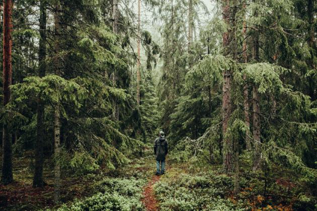 nordic-woods-hiken