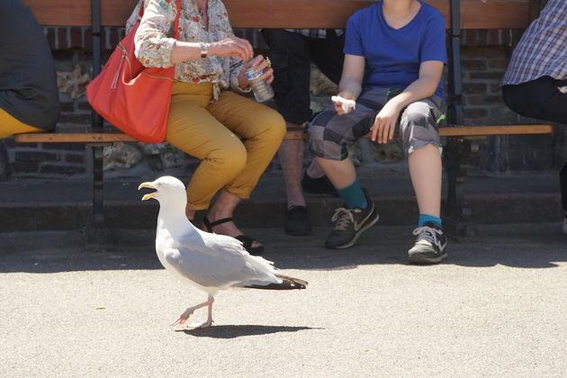 Normandie_vogels_travelvalley
