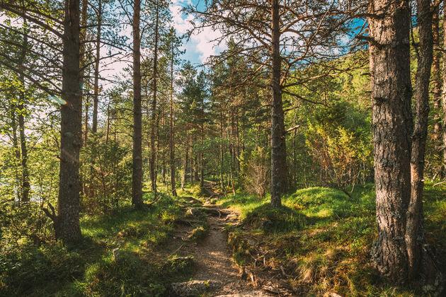 norway-trail-hiken