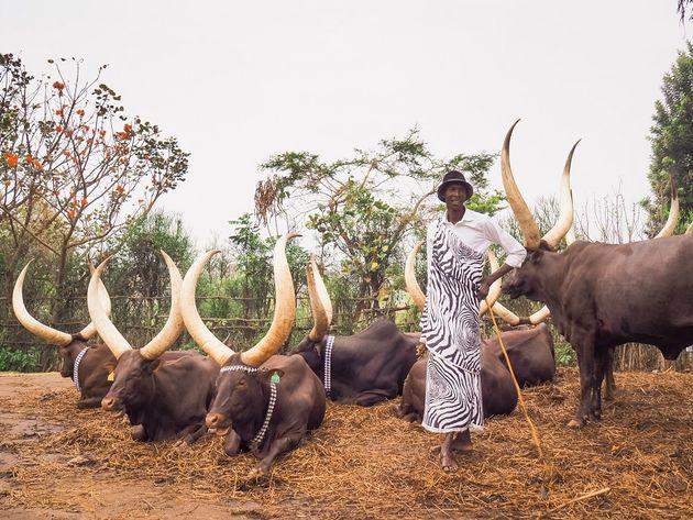 Nyanza Inyambo koeien