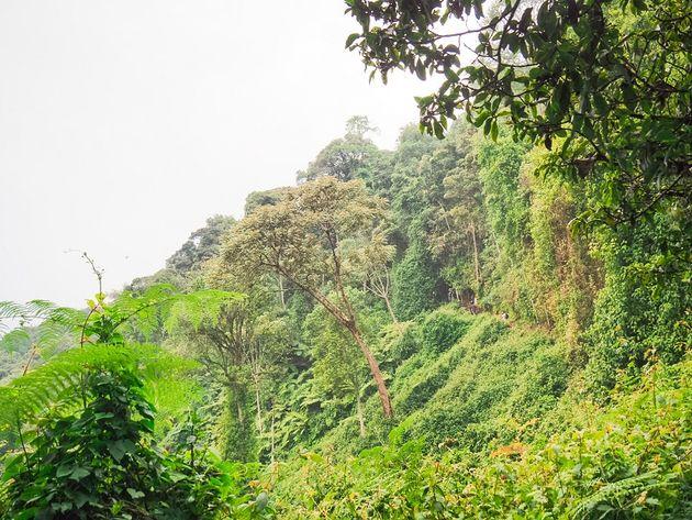 Nyungwe National Park Igishigishigi trail
