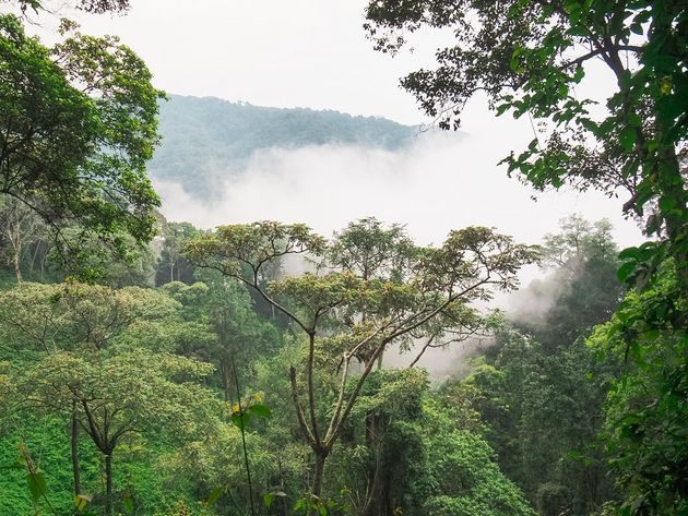 Nyungwe National Park in de mist
