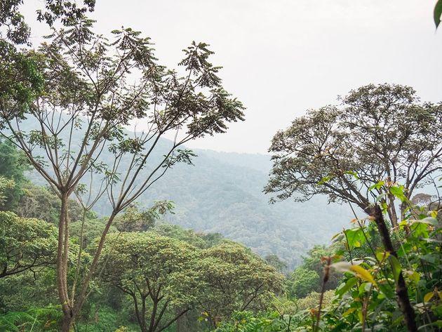 Nyungwe National Park uitzicht