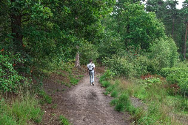 oisterwijk-bossen-wandelen