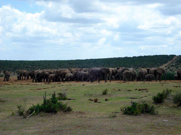 olifanten-addo