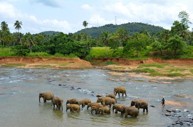olifanten-sri-lanka