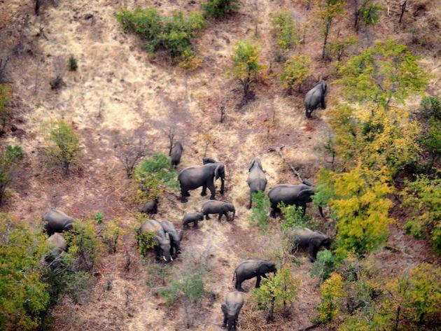 Olifanten vanuit helikopter Zambia Zimbabwe (1)