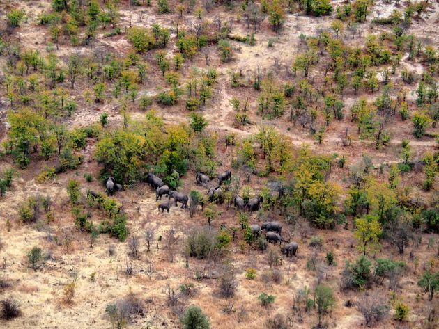 Olifanten vanuit helikopter Zambia Zimbabwe (2)