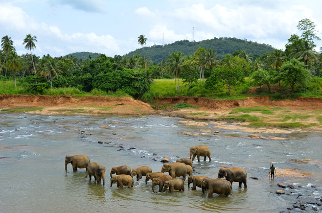 olifanten-weeshuis-sri-lanka