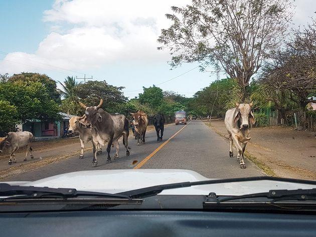 Ometepe Nicaragua (4)