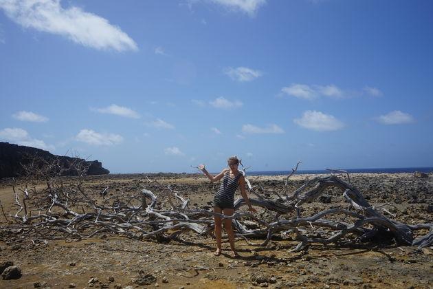 Oude_takken_Bonaire