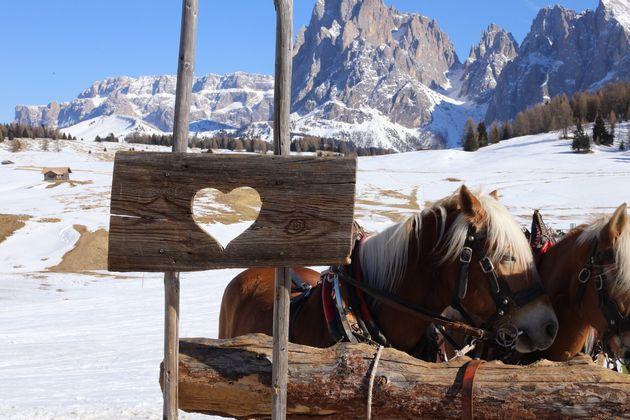 paardenslee-berghut-zuid-tirol