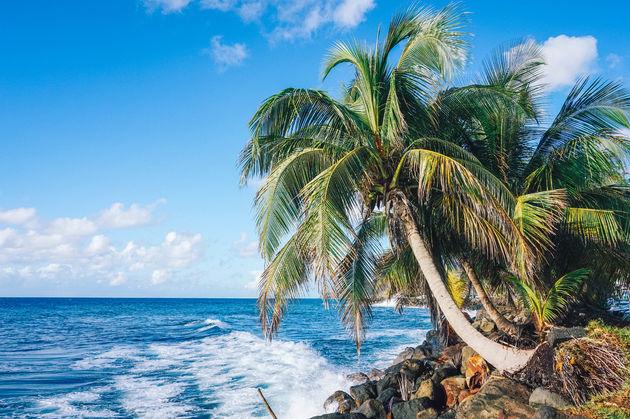 palmbomen-Guadeloupe