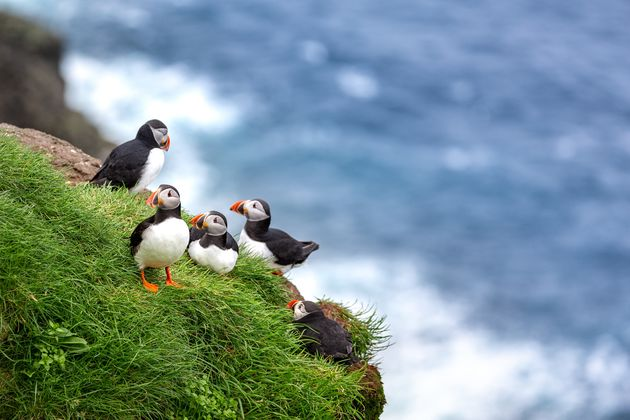 papegaaiduikers-spotten