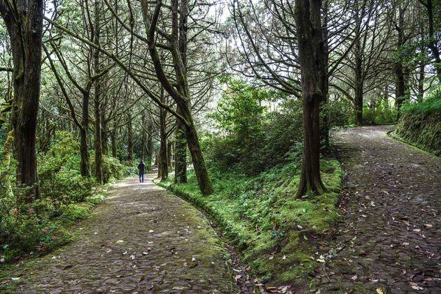Parque-Florestal-das-Queimadas