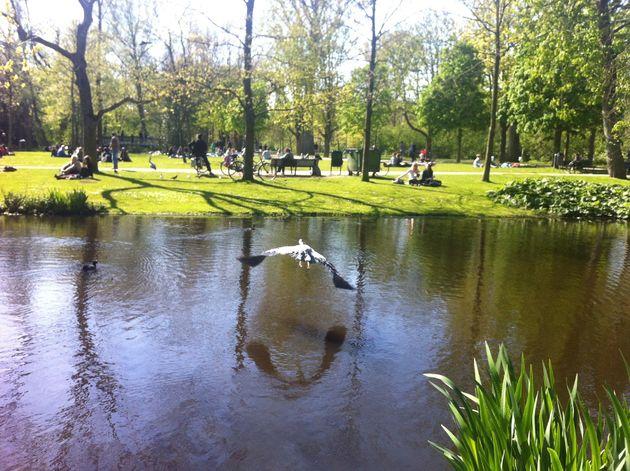 picknick-park-amsterdam