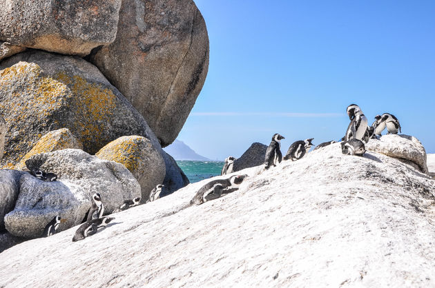 pinguins-rotsen-boulders-beach