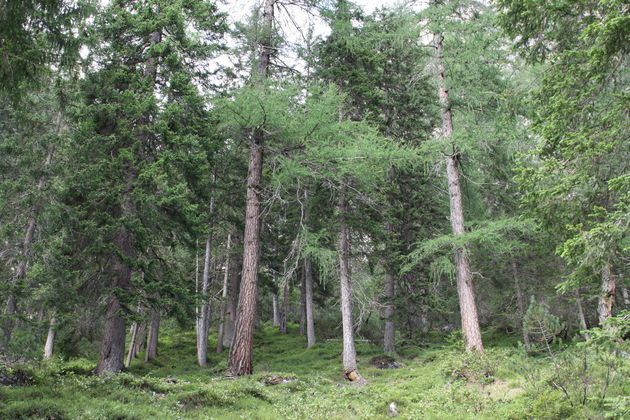 pragser-wildsee-zuid-tirol