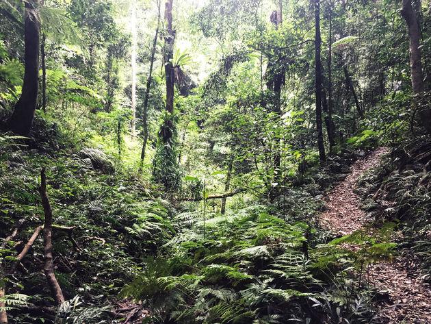 regenwoud-bellingen
