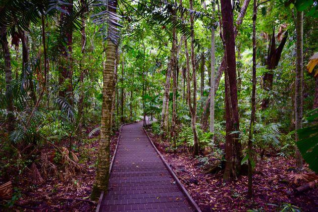regenwoud-daintree