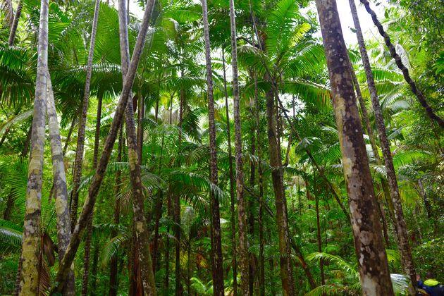 regenwoud-fraser-island