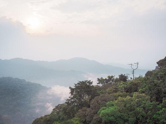Regenwoud Nyungwe National Park