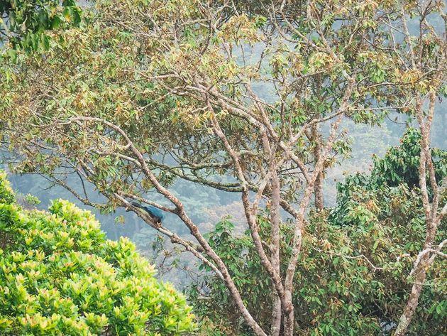 Reuzentoerako Nyungwe National Park Rwanda