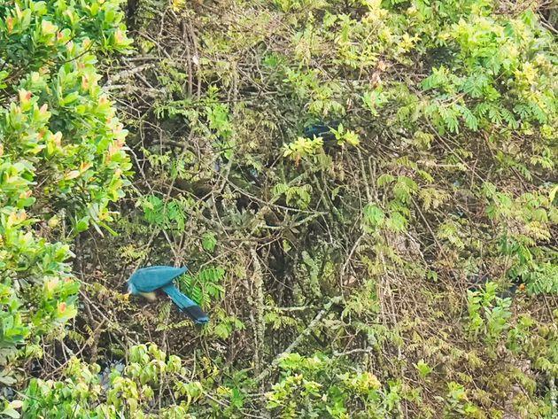 Reuzentoerako Nyungwe Rwanda