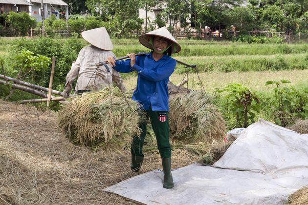 rijsplantage-muong