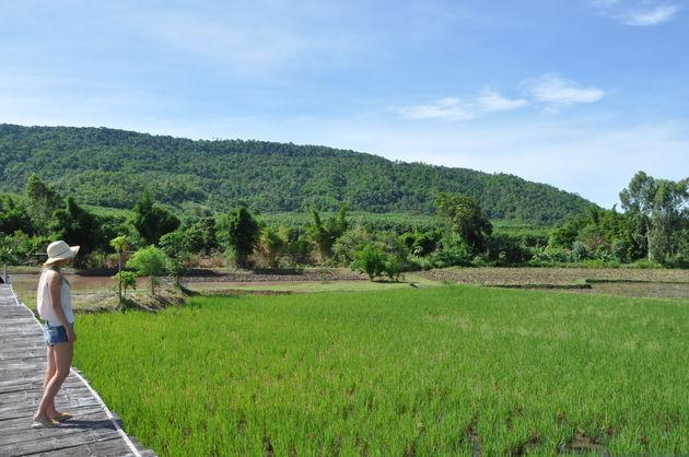 rijstplantage-loei