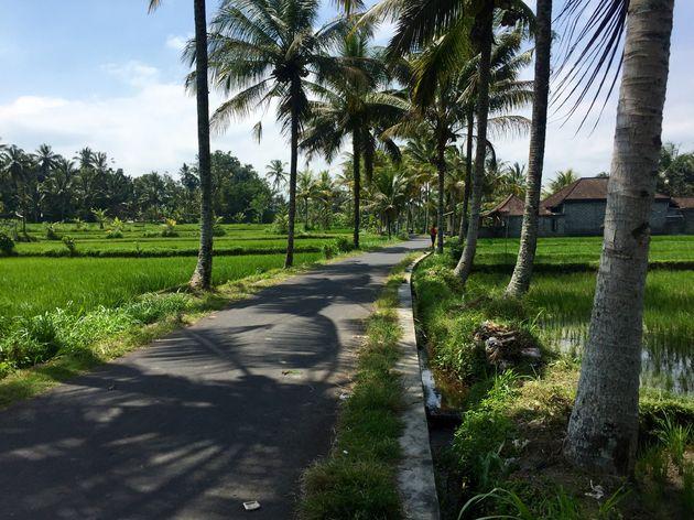 rijstvelden-ubud-fietsen