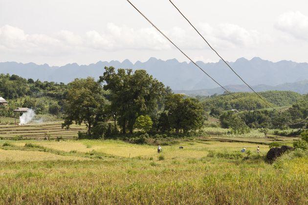 rijsvelden-vietnam