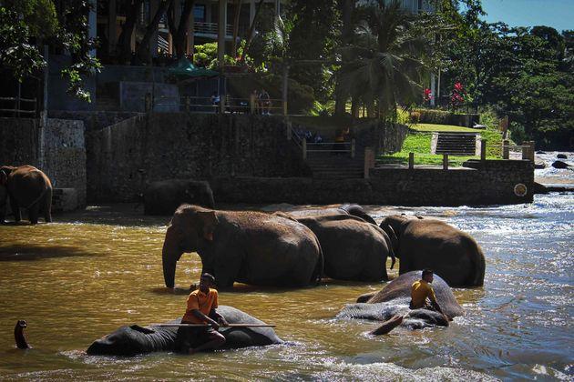 rivier_olifanten