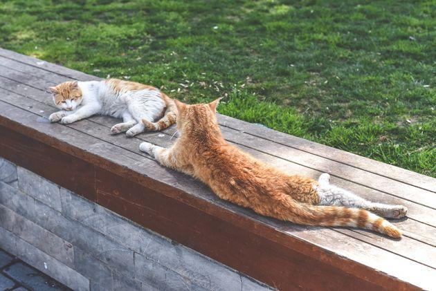 rode-katten-istanbul