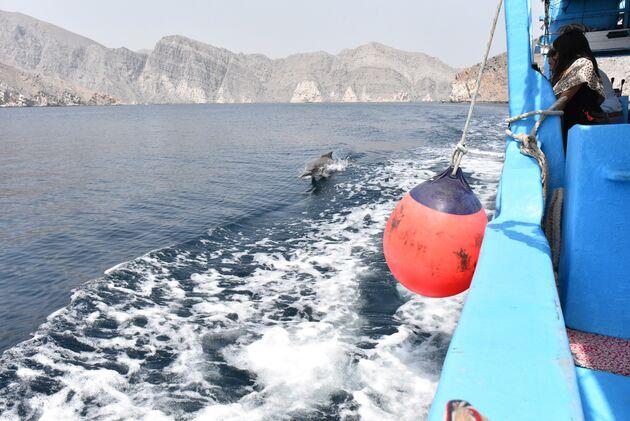 rondreis-oman-dolfijnen