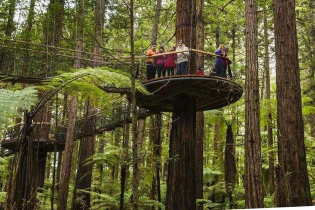rotorua-redwood