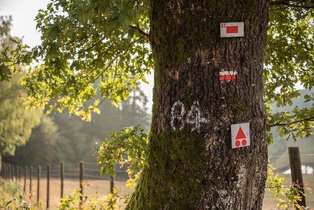 route-43-ardennen