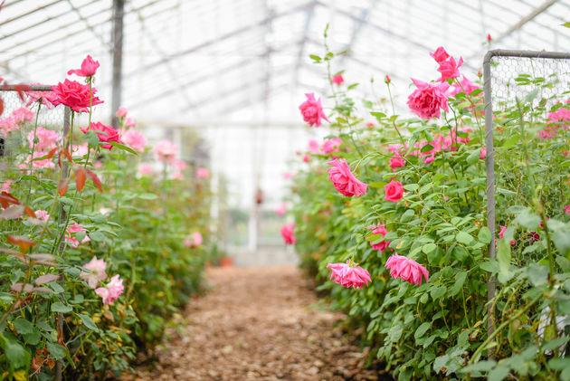 rozentuin-historische-tuin