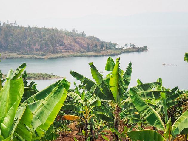 Rwanda Kivumeer bananenplantage