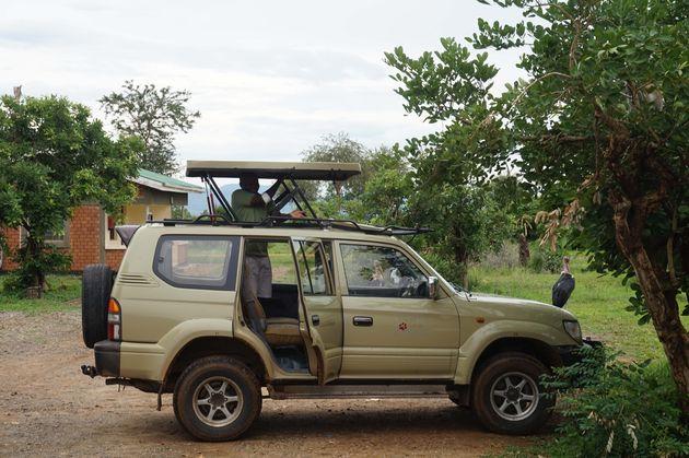 safari-tanzania-jeep