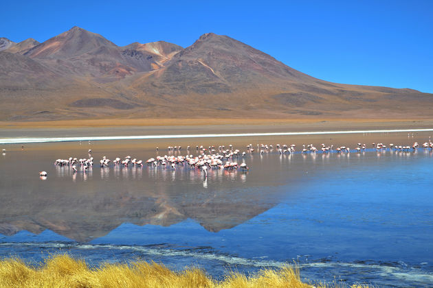 Salar-de-Uyuni-flamingos